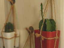 Hängender Kaktus auf weißer Holztür - Weinlese-Garten-Idee lizenzfreie stockfotografie