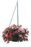 Hängender Korb der Blumen stockbilder