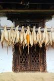 Hängender Mais auf einem Scheunenfenster Stockbilder