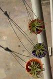 Hängender pflanzender Topf drei auf der Straße in Bangkok Stockbild