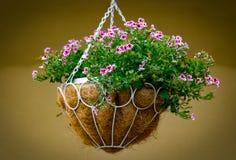 Hängender Pflanzer mit schönen Blumen und Anlagen lizenzfreie stockfotos