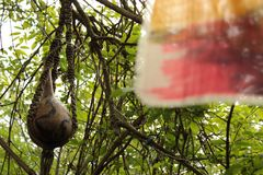 Hängender Stoff-Verpackungs-Grün-Forest Leaves And Branches Background-Foto-Schuss Lizenzfreie Stockfotos