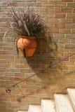 Hängender Vase des trockenen Pennisetum auf einer Weinlesebacksteinmauer Lizenzfreie Stockfotos