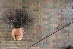 Hängender Vase des trockenen Pennisetum auf einer Weinlesebacksteinmauer Stockfotos