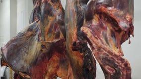 Hängendes Fleisch und -rindfleisch des Gemetzelmetzgerhauses Pferdeim Gefrierschrank Fleischkarkasse, die in einem Fleischfabrikp stock video footage
