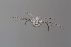 Hängendes Formnetz der Spinne stockbild