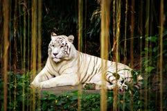 hänger upp gardiner djungeln Royaltyfri Foto