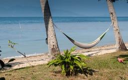 Hängmatta mellan palmträd Royaltyfria Foton
