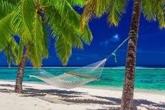Hängmatta mellan palmträd på den tropiska stranden av Rarotonga, kock royaltyfria foton