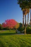 Hängmatta under palmträd på soluppgång Arkivbilder