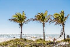 Hängmattor och palmträd Arkivbilder