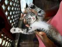 Häpen katt Fotografering för Bildbyråer