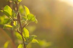 här fjäder Ljusa strålar av inställningssolen på bakgrunden av suddigt första gör grön med ljusa kulturföremål Naturen vaknar upp Royaltyfri Bild