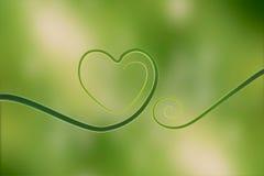 Härden av naturen, som är, består av det underbara bladet Grönt livbegrepp, Arkivfoton