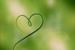 Härden av naturen, som är, består av det underbara bladet Grönt livbegrepp, Fotografering för Bildbyråer