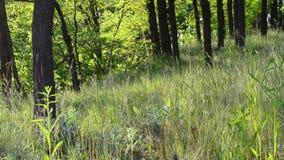Härlig äng i en skog på en solig dag arkivfilmer