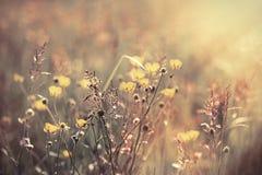 Härlig ängblomma - gulingblommor royaltyfri fotografi