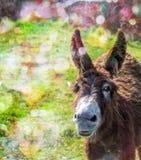 Härlig åsna på solig dag N?rbild royaltyfri foto