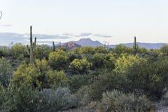 Härlig ökenlövverk nära vidskepelseberg, Apache föreningspunkt Arizona royaltyfria foton