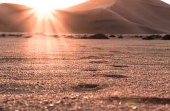Härlig ökensolnedgång och fotspår i sanden royaltyfria bilder