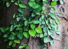 Härlig abstrakt begreppgräsplan lämnar bruk för den selektiva fokusen för bakgrund Royaltyfri Foto