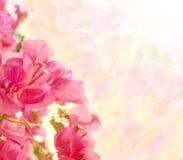 Härlig abstrakt blom- bakgrund Arkivbilder