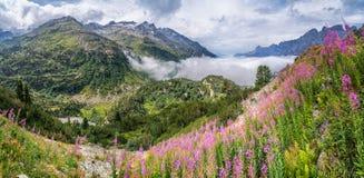 Härlig alpin panorama med ett ursnyggt landskap och att blomma för berg blommar Fotografering för Bildbyråer