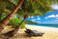 Härlig Anse Intendancestrand på Mahe Island, Seychellerna arkivfoto