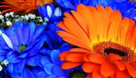 Härlig apelsin- och blåttblommabukett Royaltyfria Foton
