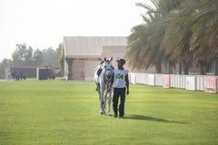 Härlig arabisk häst som får klar för ett uttålighetlopp Arkivbilder