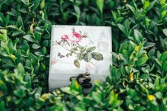 Härlig ask för cirklar Royaltyfri Foto