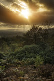 Härlig Autumn Fall solnedgång över skoglandskap med den lynniga dren Royaltyfria Foton