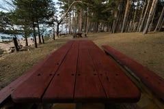 Härlig avlägsen picknick och campa fläck nära ett baltiskt hav i en pinjeskog med en stenblockstrand i bakgrunden - arkivfoto