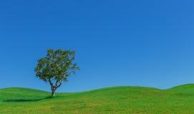 Härlig bakgrund av ängar och himmelträdet Arkivfoto