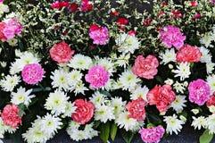 Härlig bakgrund av blandade färgrika blommor Royaltyfri Foto