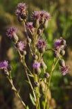 Härlig bakgrund av lösa örter och blommor i morgonsolljuset Ljust f?rgar Slapp selektiv fokus Sommarrealitet arkivbilder