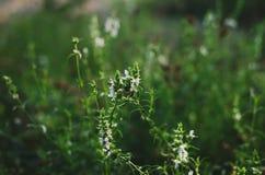 Härlig bakgrund av lösa örter och blommor i morgonsolljuset Ljust f?rgar Slapp selektiv fokus Sommarrealitet arkivfoton