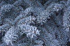 Härlig bakgrund av snö-täckte trädfilialer arkivfoton