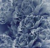 Härlig bakgrund för blom- tappningblått vita tulpan för blomma för bakgrundssammansättningsconvolvulus Bukett av blommor från mör fotografering för bildbyråer