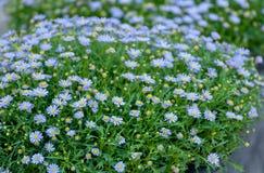 Härlig bakgrund för lilaväxtblomma Arkivbild