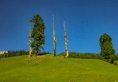 Härlig bakgrund i Kashmir royaltyfria foton