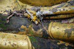 Härlig bakgrund med detaljer av händer av guld- buddha som är skadade med väder royaltyfri foto