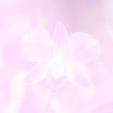 Härlig bakgrund med orkidéblomman i rosa färgfärgtema Arkivbild
