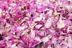 Härlig bakgrund med rosa kronblad Arkivbild