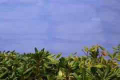 Härlig bakgrund med tomt utrymme för text, ojämn blått med sidor royaltyfria foton