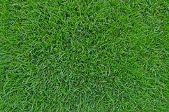 Härlig bakgrundstextur för grönt gräs Arkivbilder