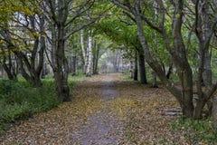 Härlig bana i skogen under nedgång Arkivfoton