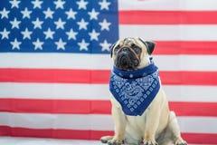 Härlig beige valpmops på bakgrunden av amerikanska flaggan på självständighetsdagen arkivbild