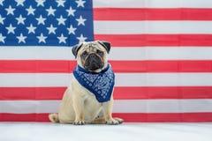 Härlig beige valpmops på bakgrunden av amerikanska flaggan på självständighetsdagen royaltyfri fotografi