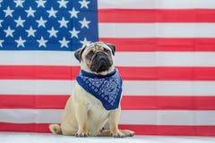Härlig beige valpmops på bakgrunden av amerikanska flaggan på självständighetsdagen arkivfoto